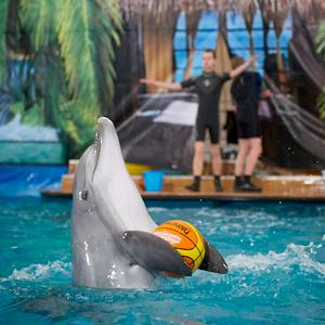 Дельфинарии, океанариумы Отрадного
