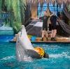 Дельфинарии, океанариумы в Отрадном